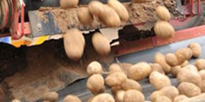 kartoffeln von top agra.fi